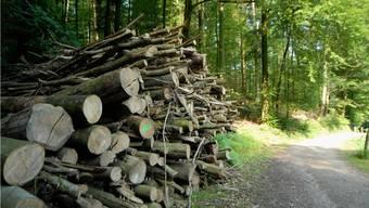 Für den Gemeinderat Bözberg überwiegen die Vorteile beim Anschluss an den Forstbetrieb Homberg-Schenkenberg.