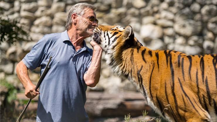 Schmusen mit Tigern gehört für René Strickler zur Arbeit.