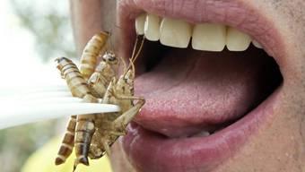 Insekten haben einen hohen Nährwert (Archiv)