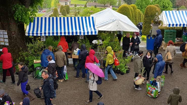 Impressionen vom 20. Pro-Specie-Rara-Setzlingsmarkt auf dem Schloss Wildegg