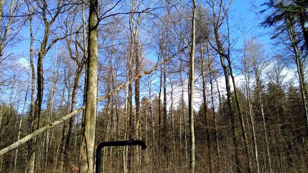 Üezmeler Bäume werden gefällt