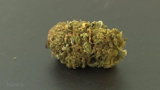 Cannabisregulierung einen Schritt weiter
