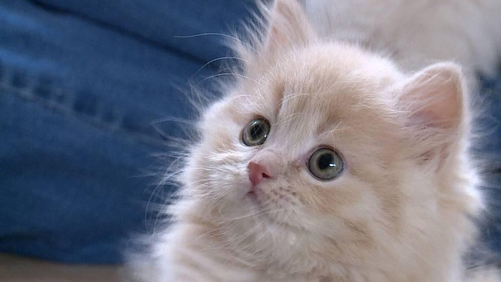 Kitten kommt ins Haus