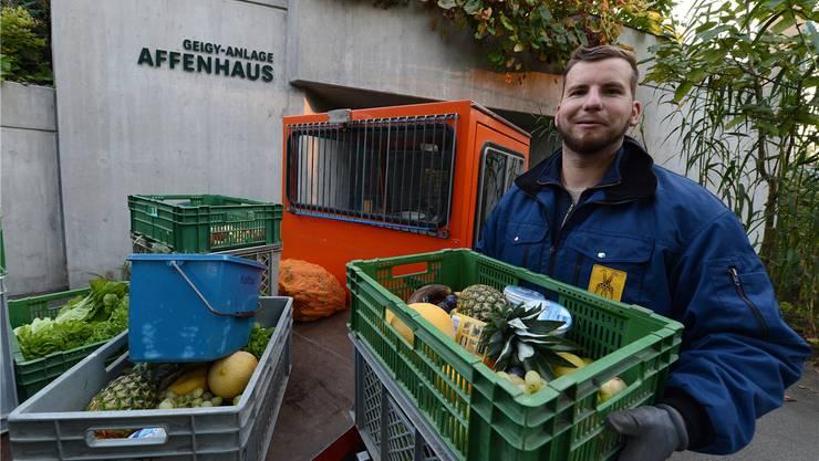 Wermelinger bringt jeden Tag ab 7 Uhr den Tierpflegern Gemüse und Früchte vorbei, die diese im Laufe des Tages ihren Tieren verfüttern