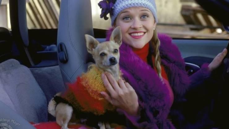"""Reese Witherspoon und Chihuahua Bruiser 2001 in """"Legally Blonde"""". Nun ist der vierbeinige Filmstar verstorben (Pressebild)."""