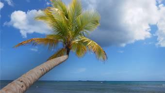 Wie lange man sich im Laufe des Berufslebens unter Palmen legen kann, hängt vom Arbeitgeber ab. Der Unterschied beträgt bis zu 230 Tage.