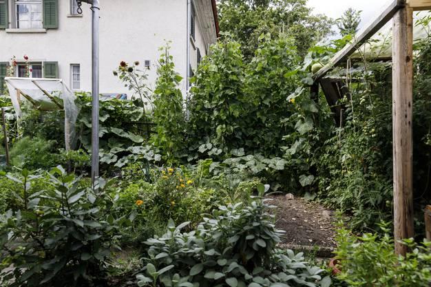 Blick auf das reichhaltige Gemüsebeet, hier wachsen Fenchel, Tomaten, Kartoffeln, Kürbisse, Bohnen, Salat...