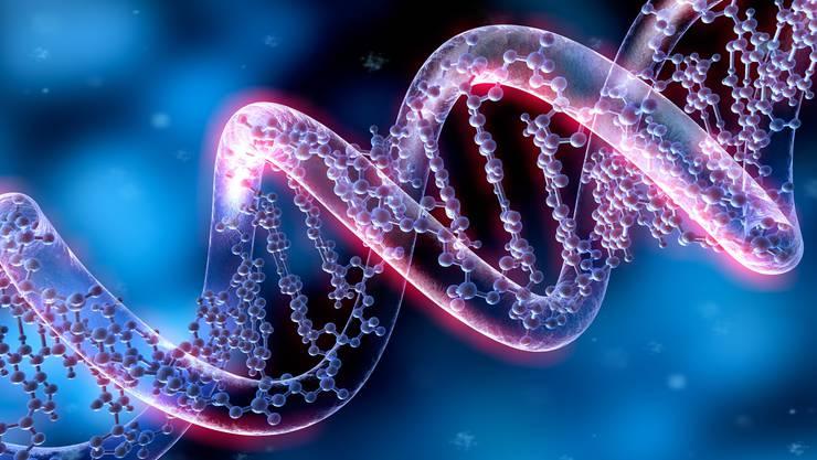 Ein Modell eines DNA-Doppelstrangs.