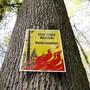 Die Waldbrandgefahr ist im Aargau vorläufig gebannt. (Archivbild)