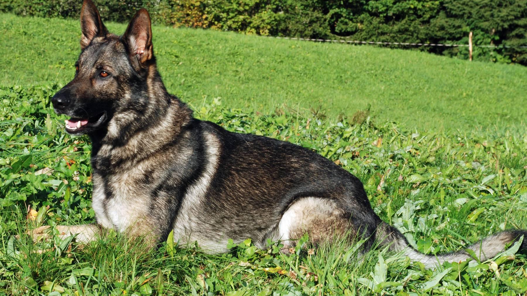 Keine Kurspflicht mehr für Hundehalter