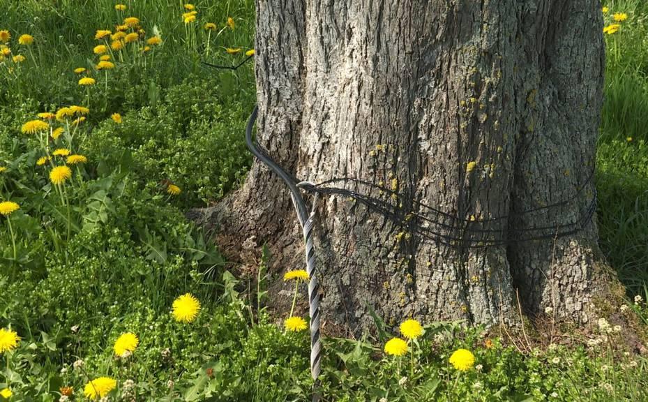 Kaum zu glauben, dass dieses Kabel in Rotzenwil von der Swisscom gelegt wurde.