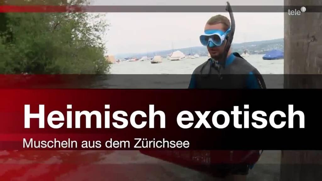 Heimisch exotisch - Muscheln aus dem Zürichsee