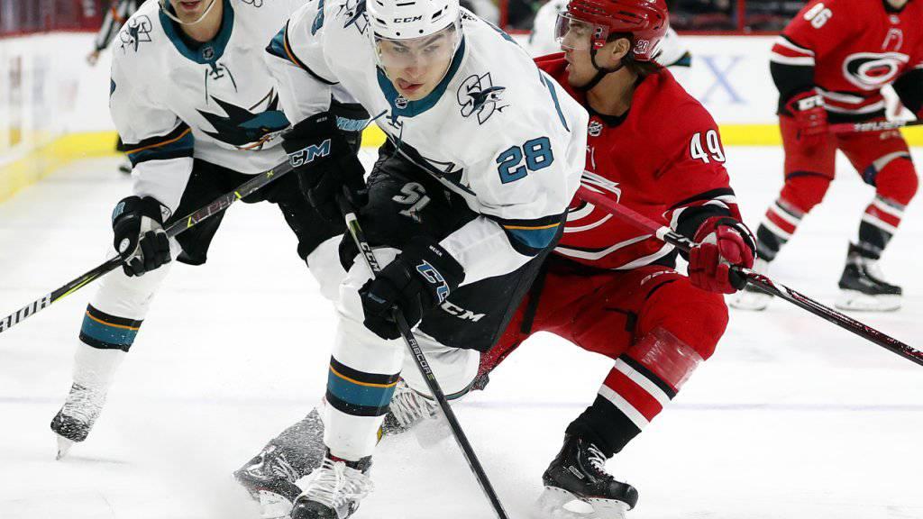 Timo Meier befindet sich mit den San Jose Sharks auf Kurs Richtung Playoffs