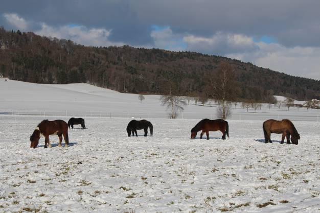 Winterstimmung im Limpachtal