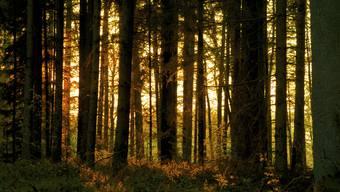 In Horgen wollten Forstarbeiter einen Baum fällen. Dann wurde einer der Arbeiter schwer verletzt.