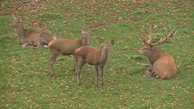Killervirus verursacht Massensterben in Tierpark