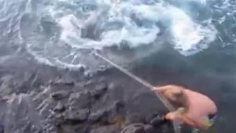 Tigerhai kämpft um sein Leben.