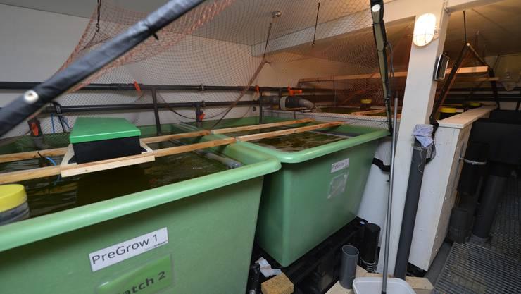 Die Becken für die Shrimps.