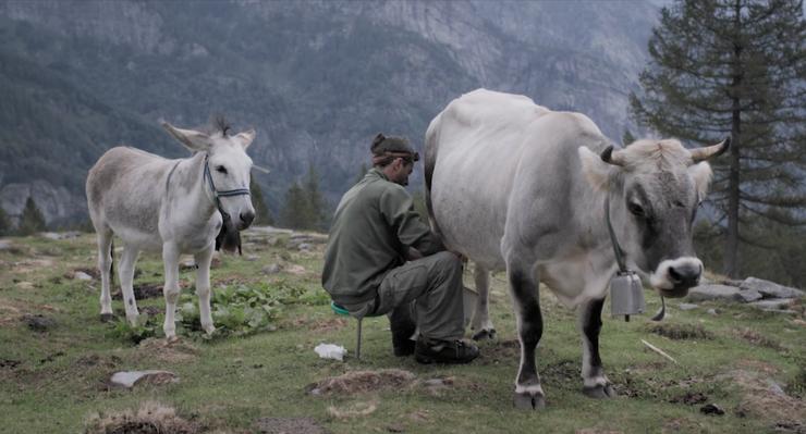«Nicht, dass sie mir noch die Kühe wegnehmen»: Fabiano beim Melken.