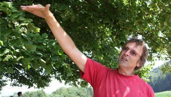 Geschäftsführer Martin Erb von der Tilia AG in Frick unter der Linner Linde: «Es gibt kaum eine ältere Linde ohne diese Pilze.» CM