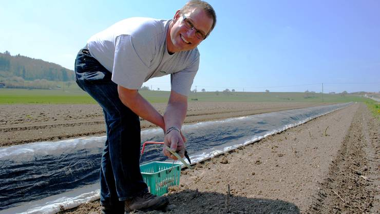Roland Brogli kann am Donnerstag die ersten grünen Spargeln schneiden – drei Wochen später, als üblich.