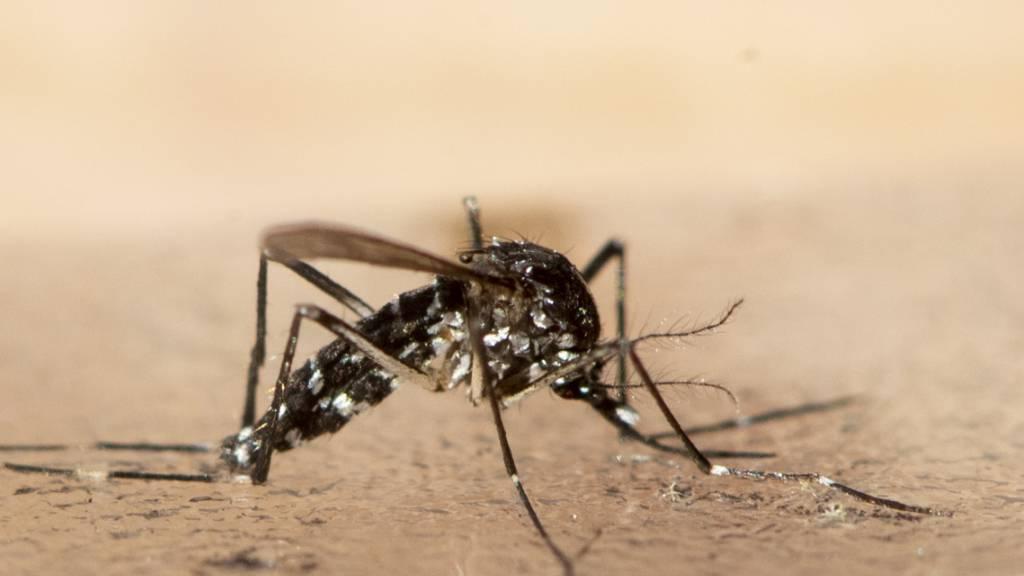 Tigermücken: Experkte rät zu sorgfältiger Überwachung