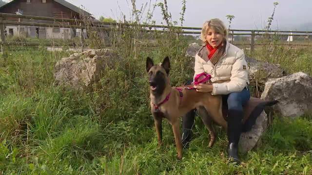 Aus dem Tierdörfli des Tierschutzvereins Olten-Solothurn und Umgebung in Wangen bei Olten/SO