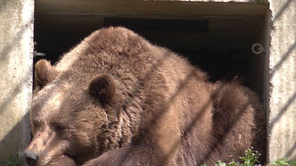 Riggisberger stehen neuem Bärenpark kritisch gegenüber