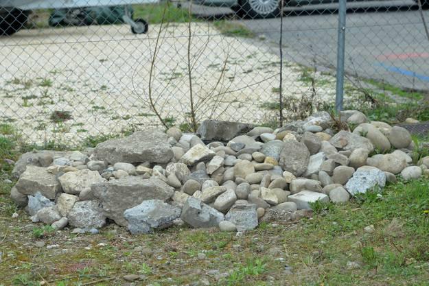 Dieser neue errichtete Steinhaufen soll Reptilien als Rückzugsort dienen.