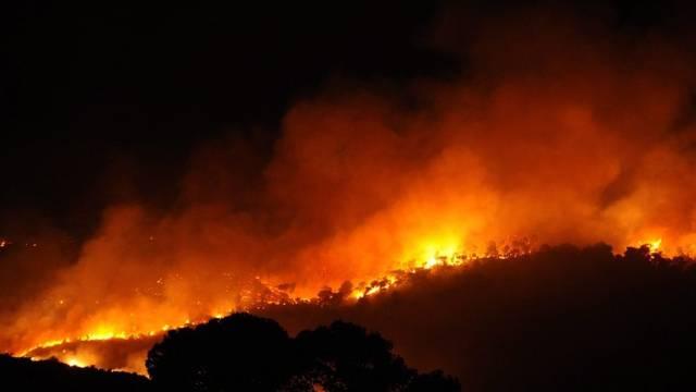 In Israel brennen die Wälder - rund 650 Hektaren Land stehen in Flammen