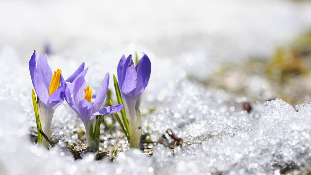 Besonders kalter Frühlingsanfang – Mild wird es erst nächste Woche