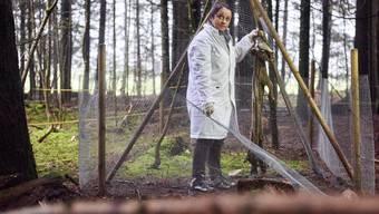 Ildikò Szelecz erforscht mithilfe von Schweinekadavern, was während der Verwesung eines toten Körpers im Waldboden passiert.
