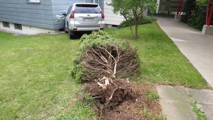 Auf dem Weg riss das Auto noch einen jungen Baum mit.