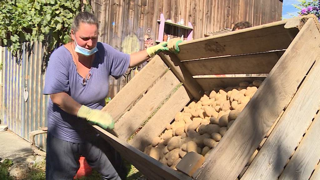 Nicht schön genug für Grosskonzern: Bauer verscherbelt Kartoffeln