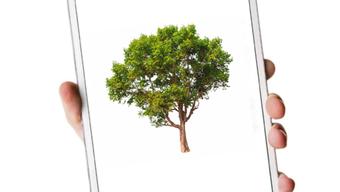 Ein Blick auf die App und der Förster weiss, welche Bäume er pflanzen soll.