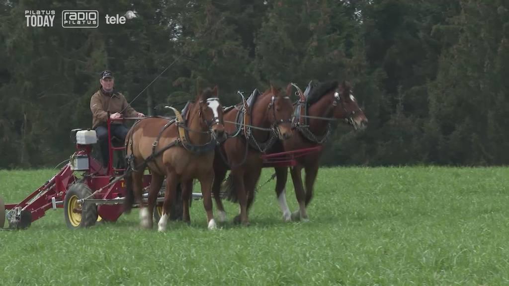 Pferd und Pflug sind wieder im Trend