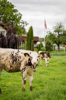 Wie war das mit den gescheitesten Kühen? Ja, in Muhen können sie den halben Dorfnamen muhen.