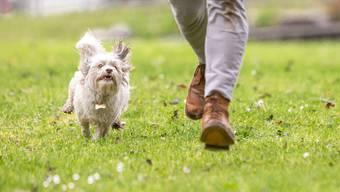 Kleine Hunde wirken harmlos, doch auch sie haben Zähne, mit denen sie sich wehren. Da lohnt sich eine gute Erziehung.