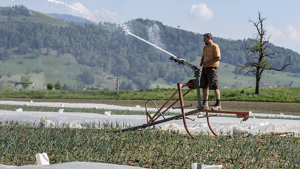 Ein Landwirt bewässert seine Gemüsefelder in Inwil: Der Kanton Luzern muss 27'500 Hektaren ackerfähiges Land erhalten. (Archivbild)