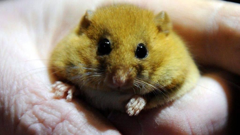 Die gefühlvolle Maus: Mimik verrät laut Studie Stimmungslage