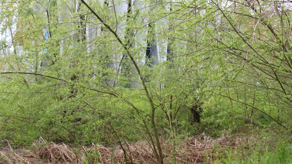 Kanton Aargau will mehr Biodiversität bei eigenen Liegenschaften