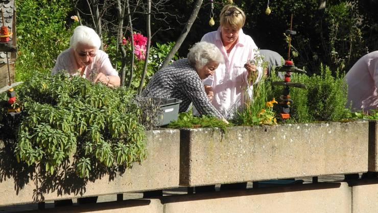 Die Gartengruppe des Alterszentrums Ruggacker macht ihren Garten winterfest. Es ist einer der letzten Gartennachmittage in dieser Saison.
