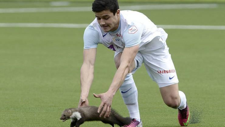 Loris Benito versucht das Tierchen einzufangen...