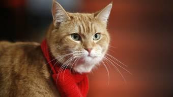 """ARCHIV - Katze Bob bei der Premiere des Films """"A Street Cat Named Bob"""". Es war eine Freundschaft, die Millionen Menschen berührte: Nun ist die Straßenkatze Bob gestorben. Das teilte Besitzer James Bowen mit. Foto: Alastair Grant/AP/dpa"""