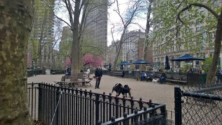 In New York gehören Hundeparks schon lange zu den beliebten Treffpunkten für Mensch und Tier.