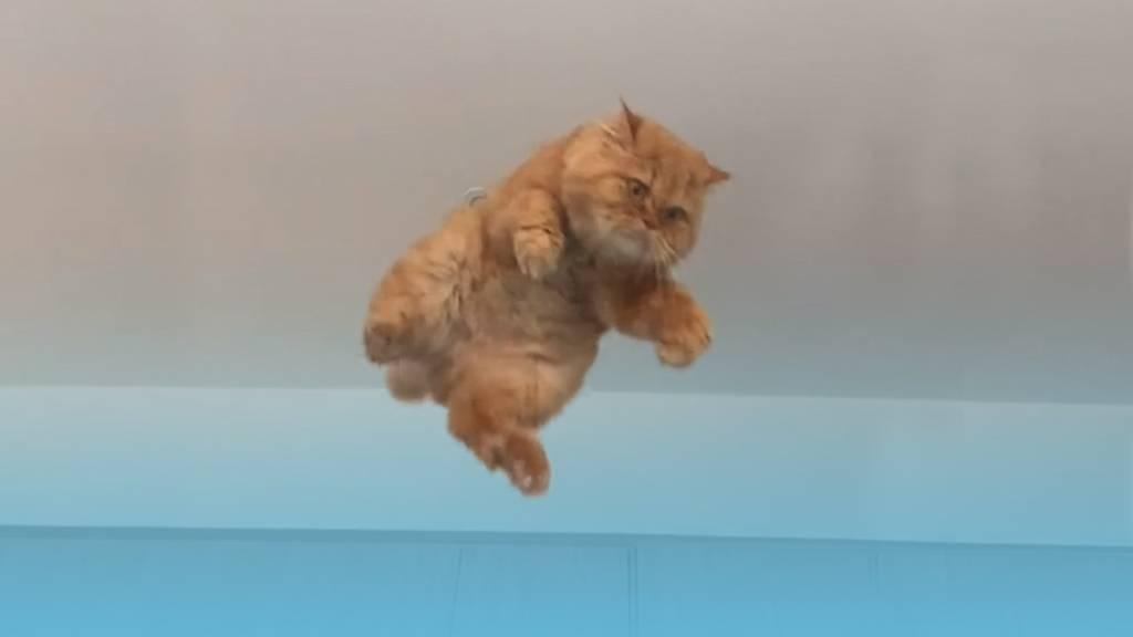 Da fliegt eine Katze durchs Zimmer