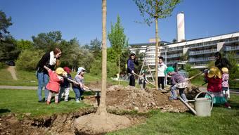 Basler Stadtgärtnerei pflanzt den Baum des Jahres im St. Johanns-Park