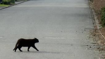 Ein Autofahrer verliert die Kontrolle über sein Auto, weil er einer Katze ausweichen musste
