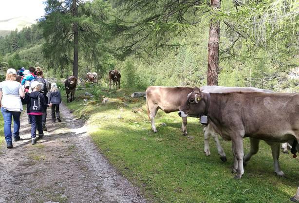 Familien wandern durch das Val Tavrü beim Nationalpark Zernez, das in der Nähe von Scuol liegt.