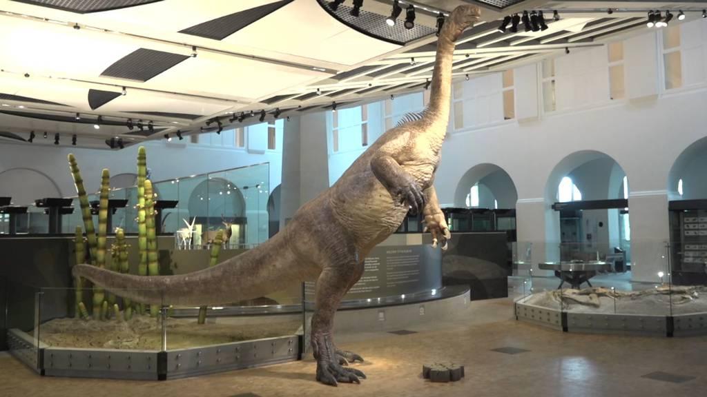 Er kommt aus dem Fricktal: Plateosaurus ist neuer Star im Zoologischen Museum Zürich